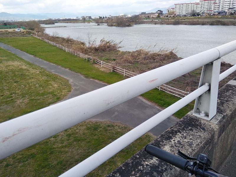 桂川右岸のサイクリングロード?