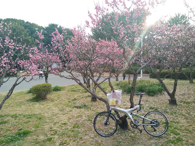 服部緑地の梅