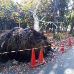 台風21号のあとの北大阪、北摂、阪神、六甲山の通行止め情報