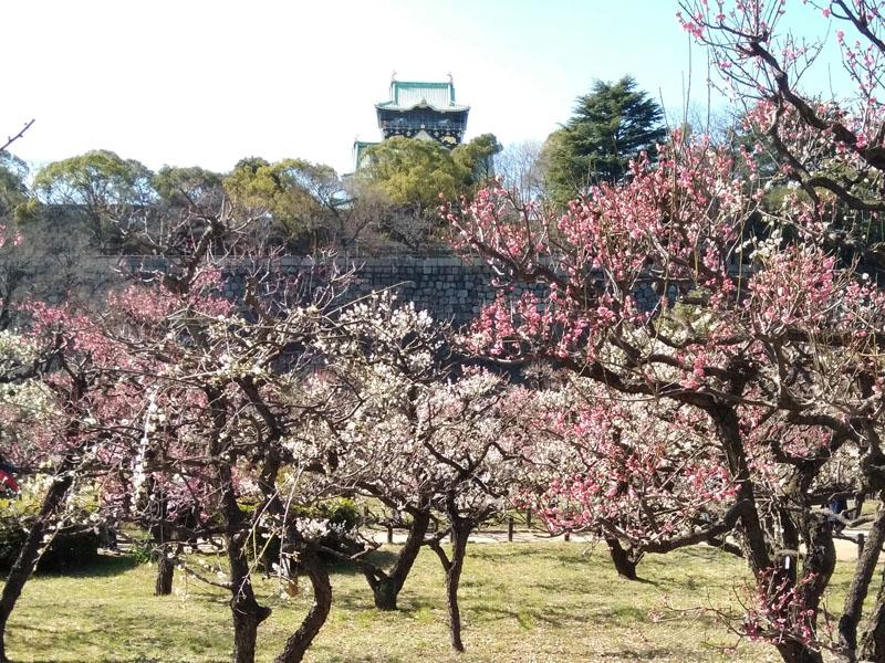 大坂城梅園