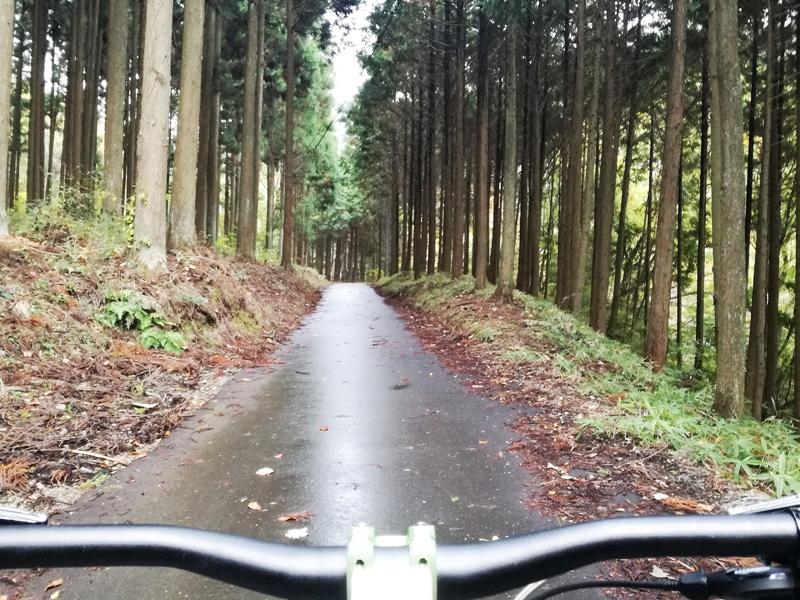 きれいな林道